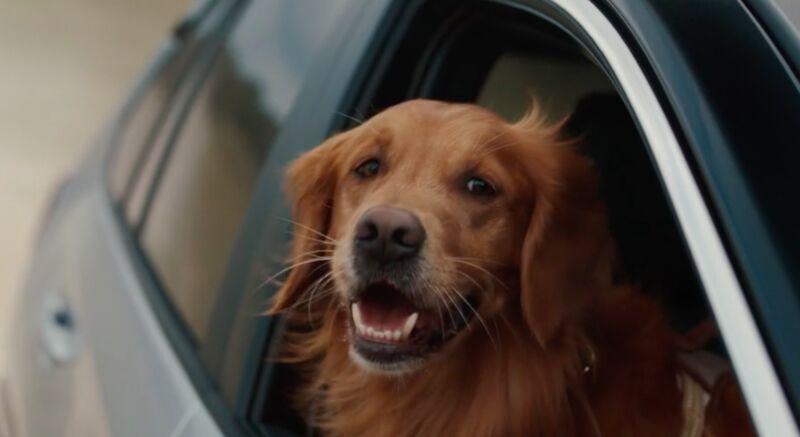 Funny Dog Adventure Ads