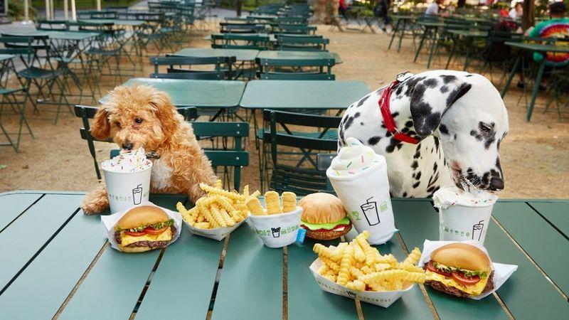 Burger Chain-Themed Dog Toys