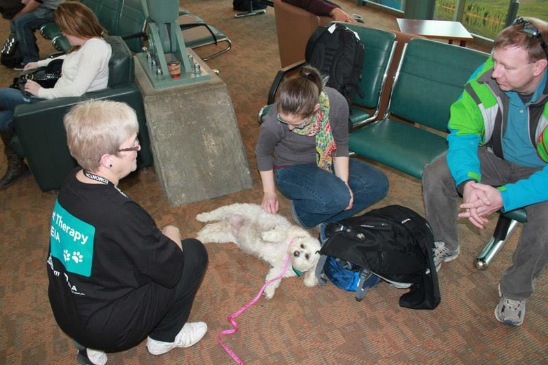 Travel Therapy Dogs