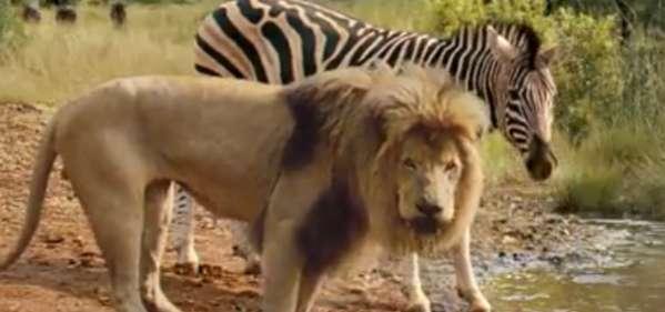 Predator-Free Safaris