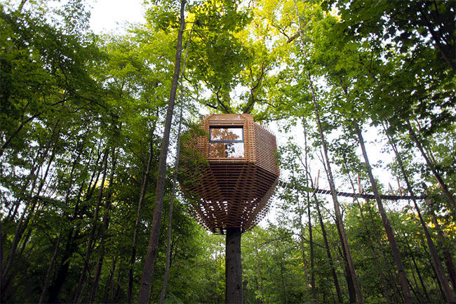 Birdnest Treehouse Designs