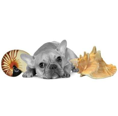Shell-Tastic Pet Playthings