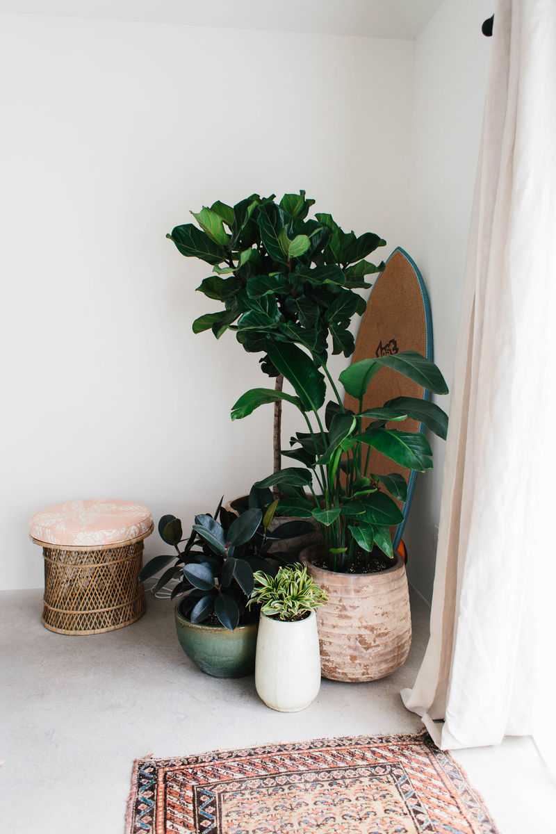 Tropical House Interiors