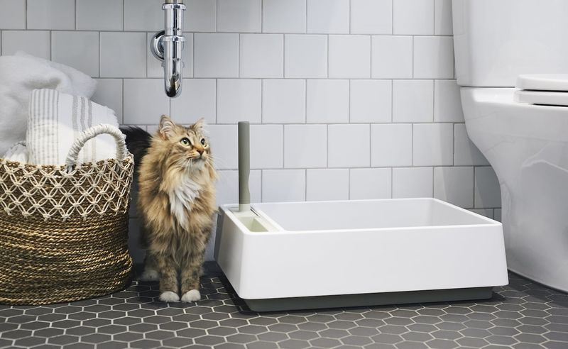 All-in-One Litter Boxes