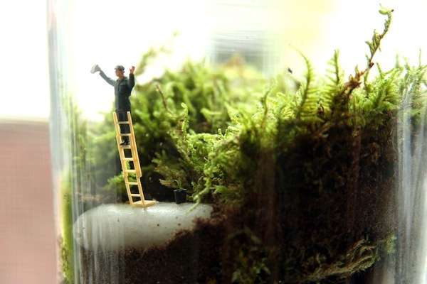 Moss Microcosms
