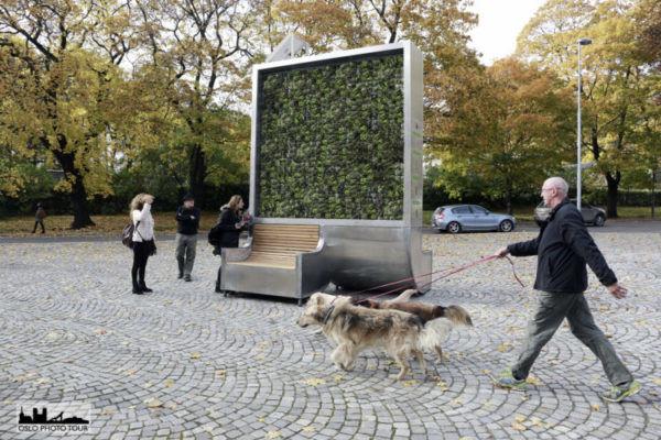Urban Tree Installations