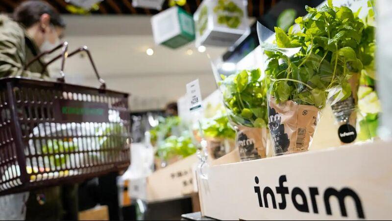 Ultra-Fresh Urban-Farmed Produce