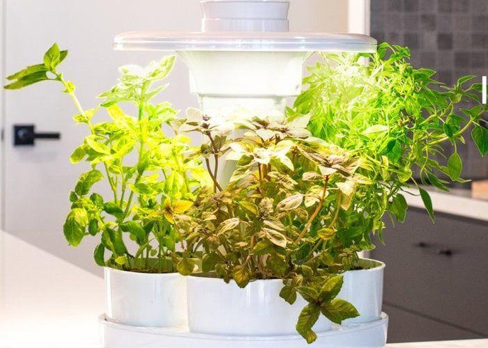 Expert-Designed Smart Gardens