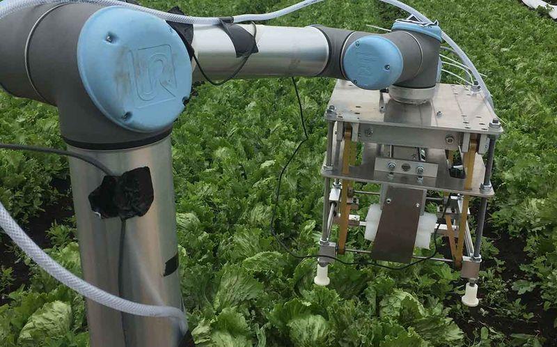 AI-Powered Harvesting Robots