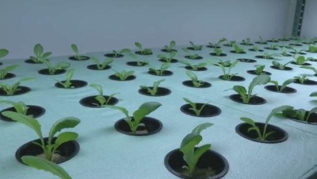 Garage-Grown Produce