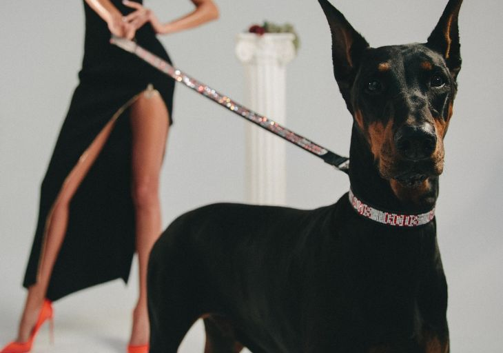 Luxury Dog Wear Lines