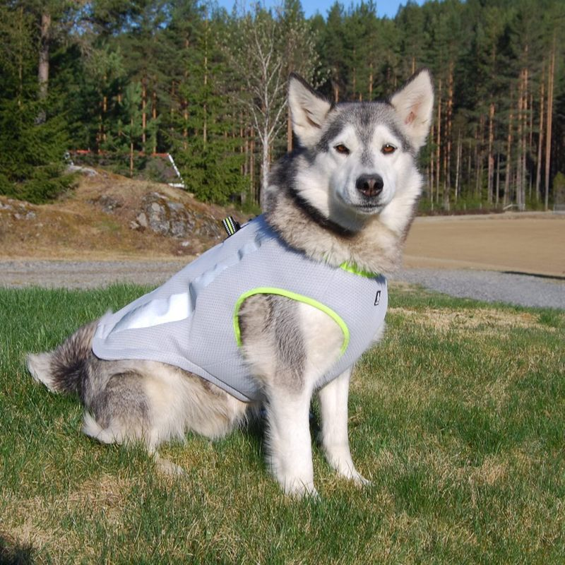 Canine-Cooling Vests