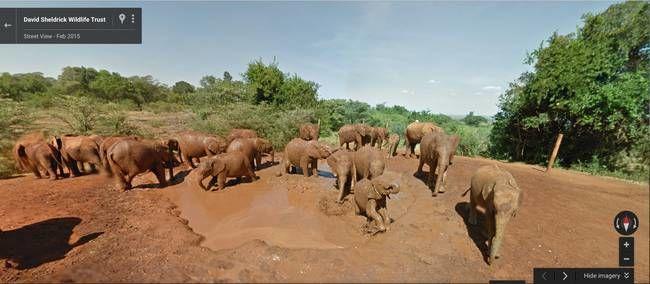 Virtual Safari Tours