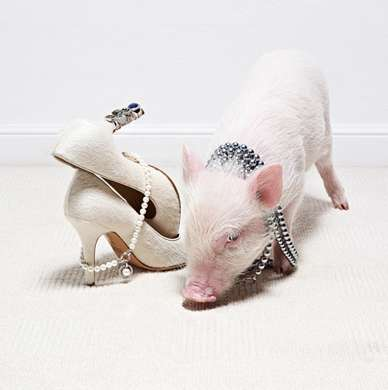 Couture-Adorned Creatures