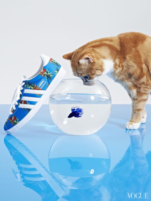 Feline Footwear Editorials