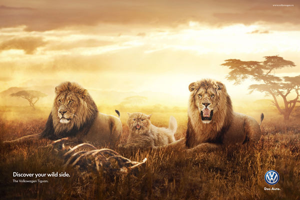 Wild Domestic Animal Ads Volkswagen Tiguan 2014