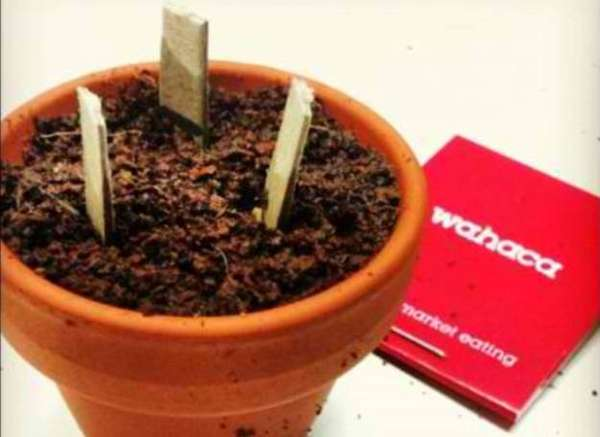 Plantable Restaurant Matchbooks