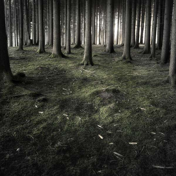 Mystical Forest Photography