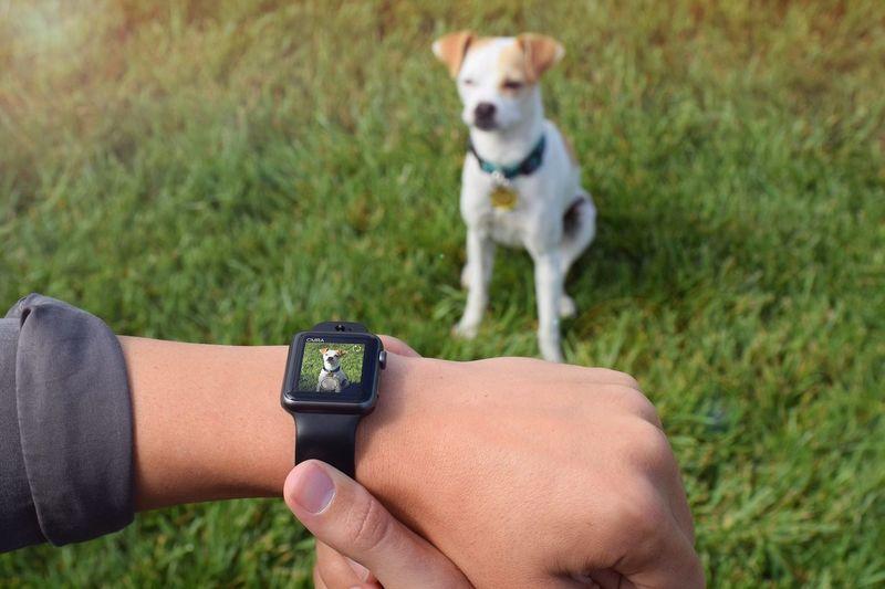 Aftermarket Smartwatch Cameras