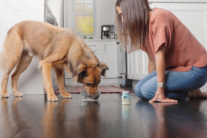 Dog-Friendly Water Enhancers