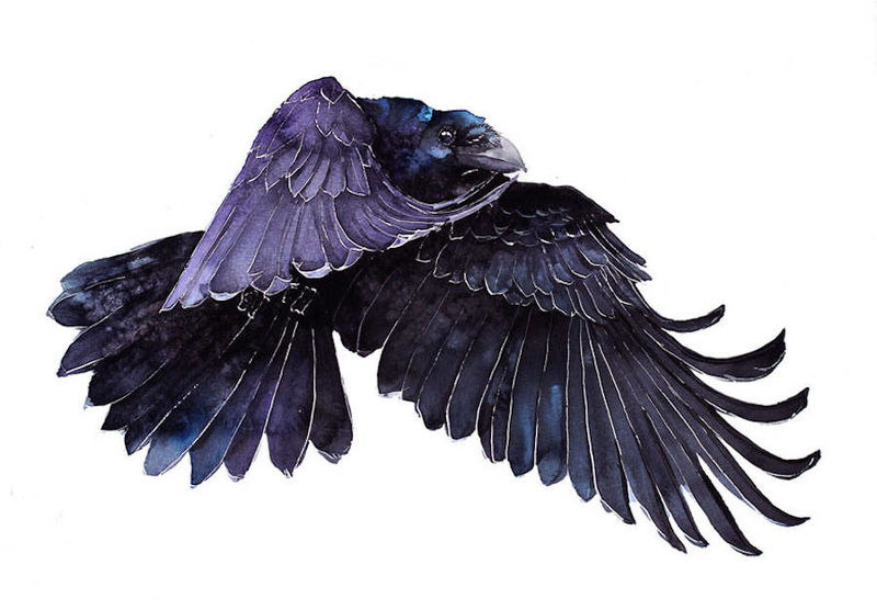 Watercolor Bird Portraits