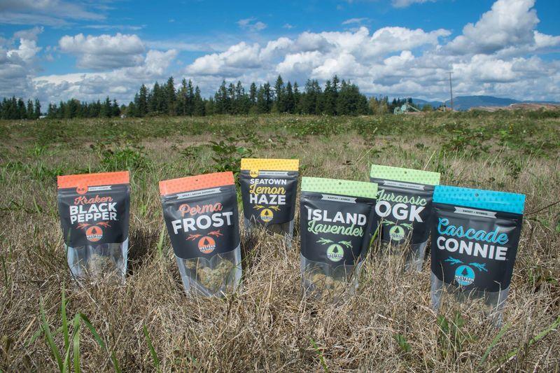 Adventurous Cannabis Branding