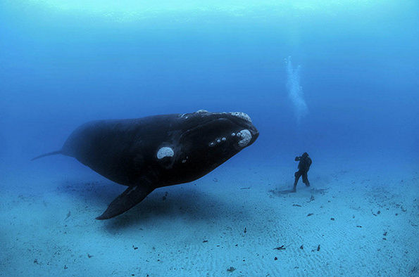 Magnificent Whale Photography