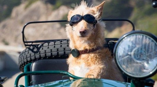 Advanced Pet Trackers