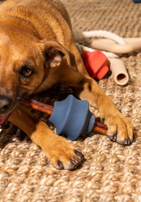 Timeless Minimal Dog Toys
