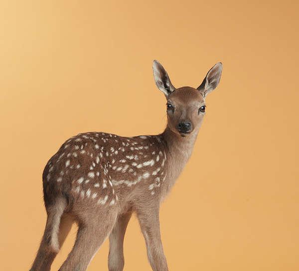 Vibrant Animal Portraits