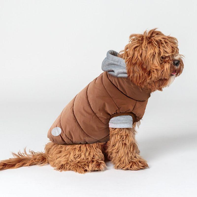 Streetwear-Inspired Dog Apparel