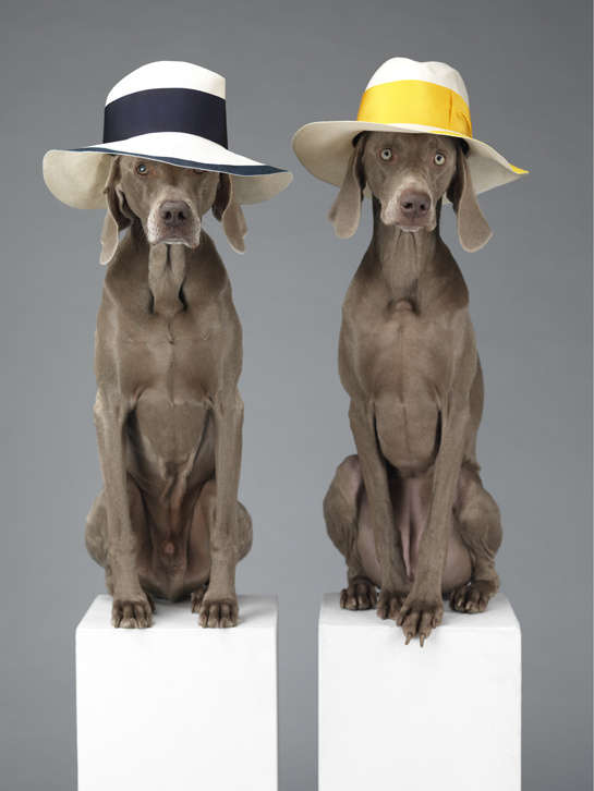 William Wegman : Fashion Photographs: Ingrid Sisch, William 1