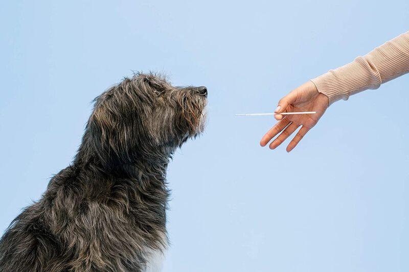 Comprehensive Dog DNA Tests