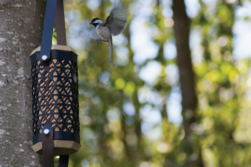 Non-Migratory Bird Aviaries
