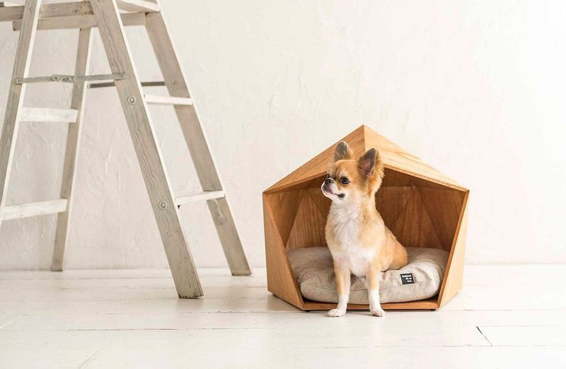 Angular Geometric Pet Houses