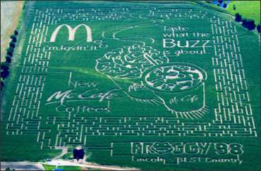 Branded Corn Fields