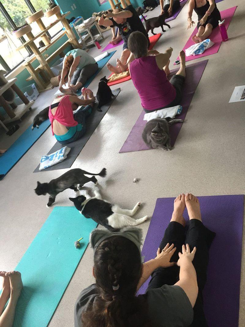 Feline Yoga Classes