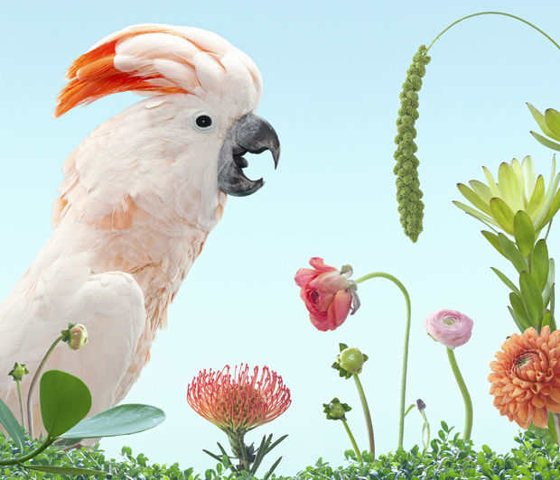 Fantastical Avian Compositions