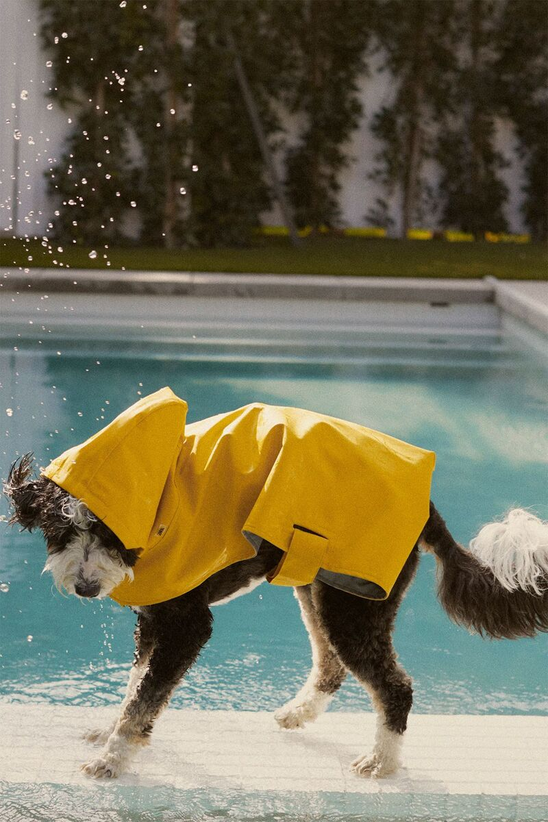 Fashionable Pet Collections