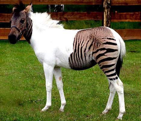 Zany Animal Hybrids